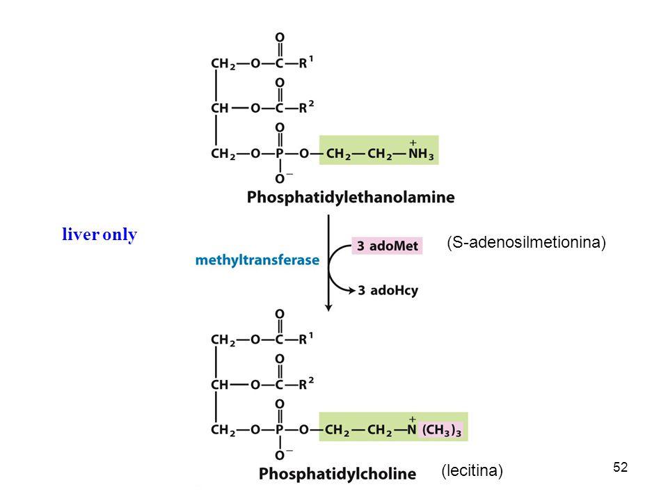 52 liver only (S-adenosilmetionina) (lecitina)