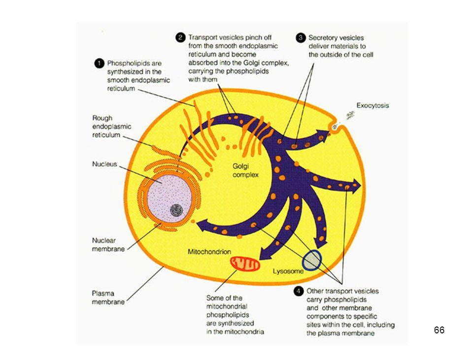 67 Lipid storage diseases or sphingolipidoses: