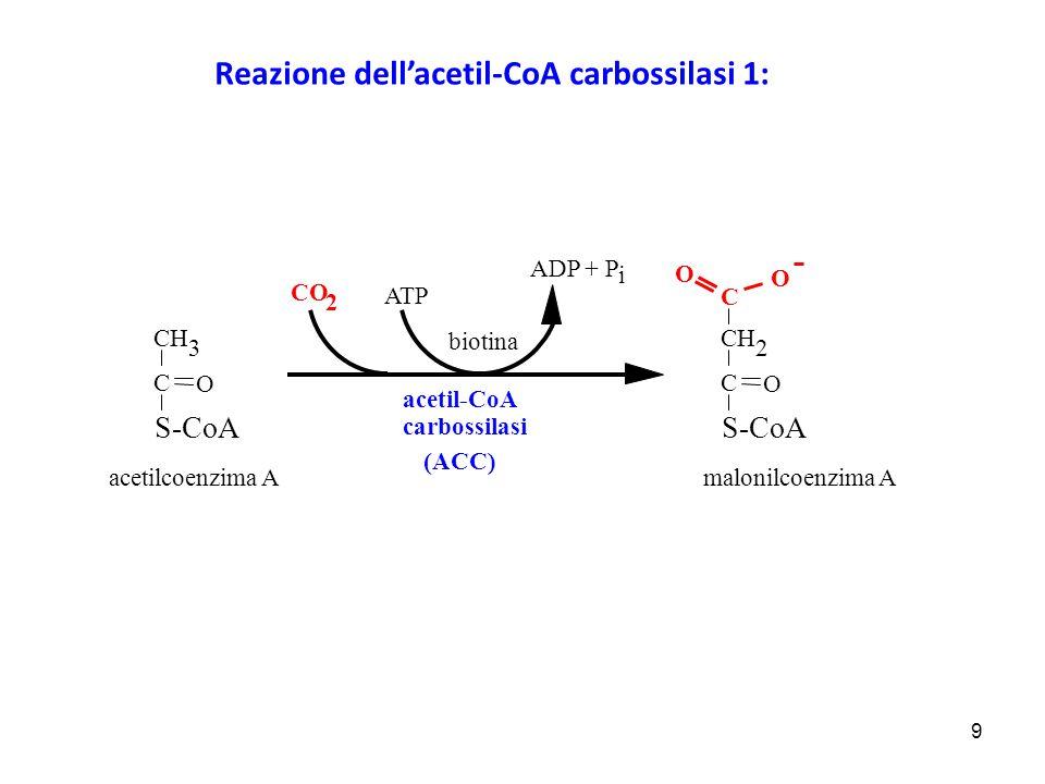 9 acetil-CoA carbossilasi acetilcoenzima A S-CoA biotina CO 2 ATP C CH O 2 C O O S-CoA CH O 3 C ADP + P i malonilcoenzima A (ACC) Reazione dell'acetil