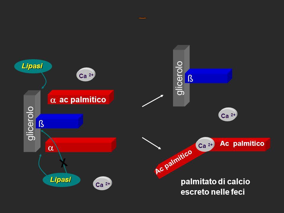 ß Ca 2+ glicerolo ac palmitico   ß Lipasi X Lipasi palmitato di calcio escreto nelle feci Ac palmitico Ca 2+ ß glicerolo ß