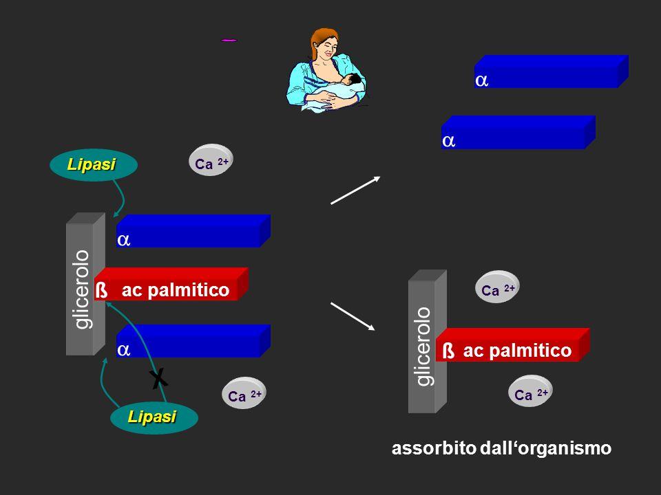 ac palmitico   ß Ca 2+ Lipasi X Lipasi   assorbito dall'organismo ßß glicerolo ac palmitico Ca 2+ ß