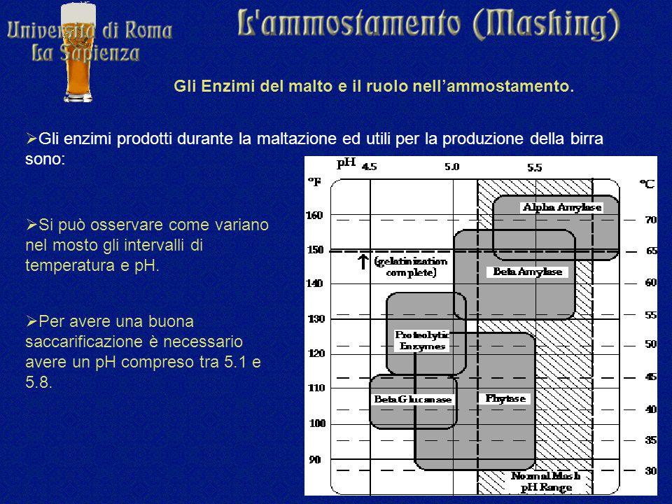 Gli Enzimi del malto e il ruolo nell'ammostamento.