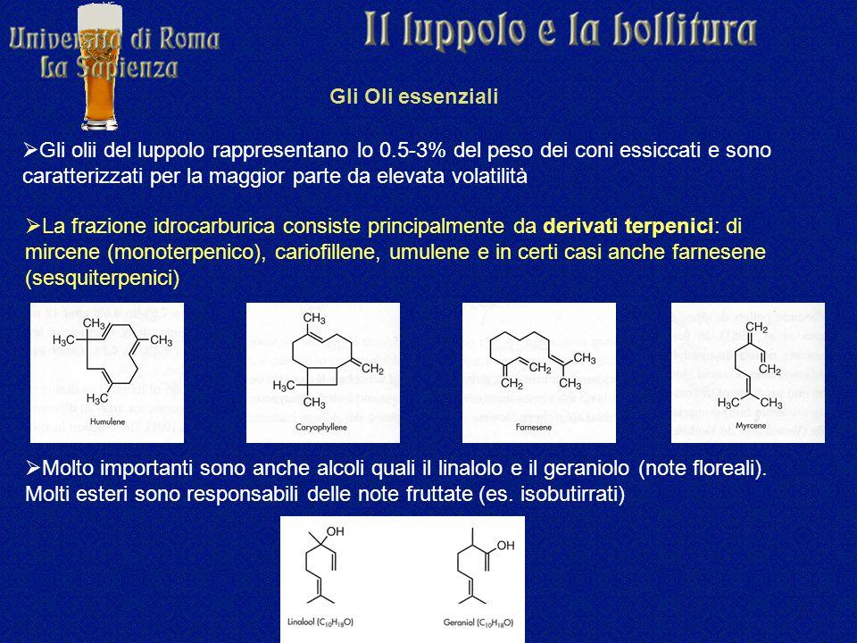 Gli Oli essenziali  Gli olii del luppolo rappresentano lo 0.5-3% del peso dei coni essiccati e sono caratterizzati per la maggior parte da elevata volatilità  La frazione idrocarburica consiste principalmente da derivati terpenici: di mircene (monoterpenico), cariofillene, umulene e in certi casi anche farnesene (sesquiterpenici)  Molto importanti sono anche alcoli quali il linalolo e il geraniolo (note floreali).
