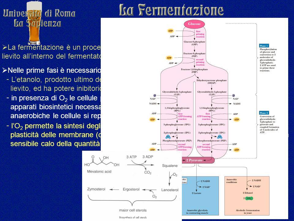  La fermentazione è un processo anerobio, ma nonostante questo dopo l'inoculo del lievito all'interno del fermentatore, si procede ad ossigenare il mosto.