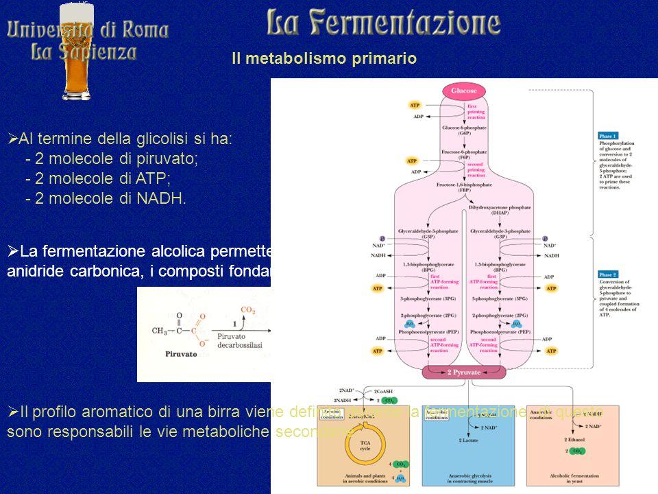  Al termine della glicolisi si ha: - 2 molecole di piruvato; - 2 molecole di ATP; - 2 molecole di NADH.