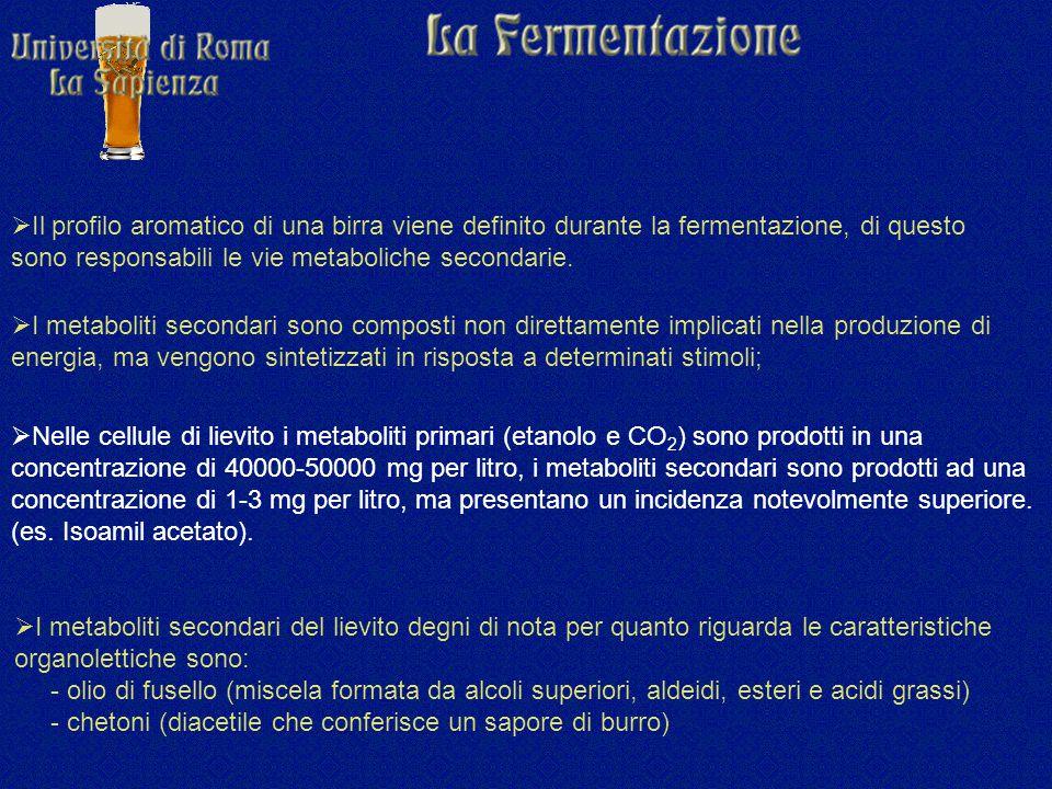  I metaboliti secondari sono composti non direttamente implicati nella produzione di energia, ma vengono sintetizzati in risposta a determinati stimoli;  Nelle cellule di lievito i metaboliti primari (etanolo e CO 2 ) sono prodotti in una concentrazione di 40000-50000 mg per litro, i metaboliti secondari sono prodotti ad una concentrazione di 1-3 mg per litro, ma presentano un incidenza notevolmente superiore.