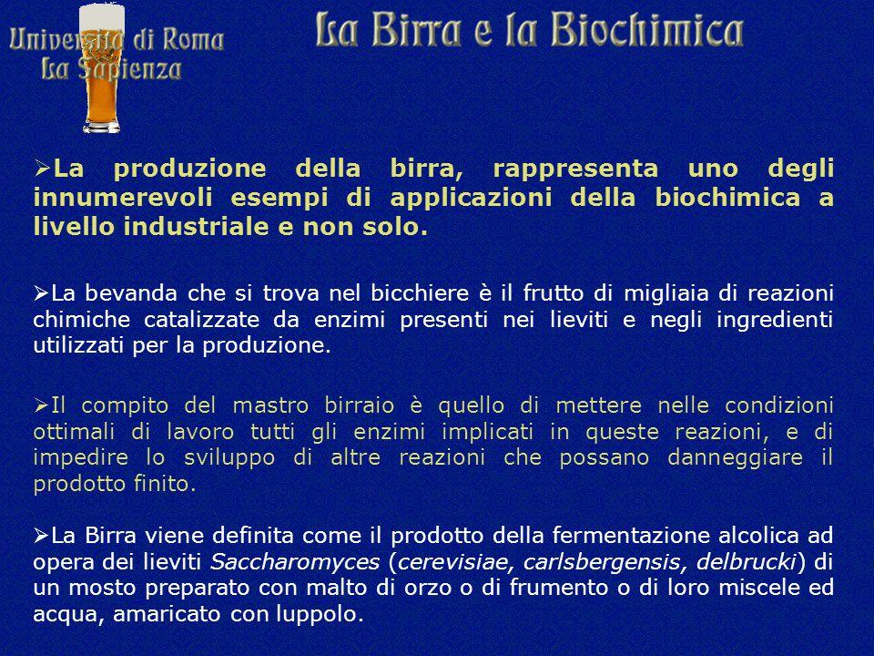  La produzione della birra, rappresenta uno degli innumerevoli esempi di applicazioni della biochimica a livello industriale e non solo.