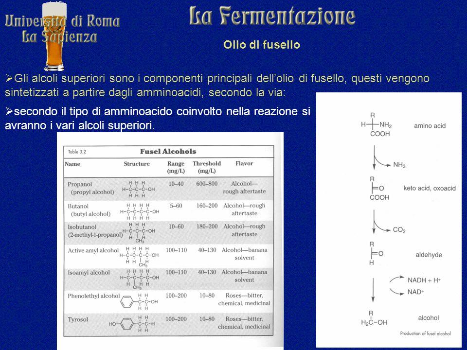 Olio di fusello  Gli alcoli superiori sono i componenti principali dell'olio di fusello, questi vengono sintetizzati a partire dagli amminoacidi, secondo la via:  secondo il tipo di amminoacido coinvolto nella reazione si avranno i vari alcoli superiori.