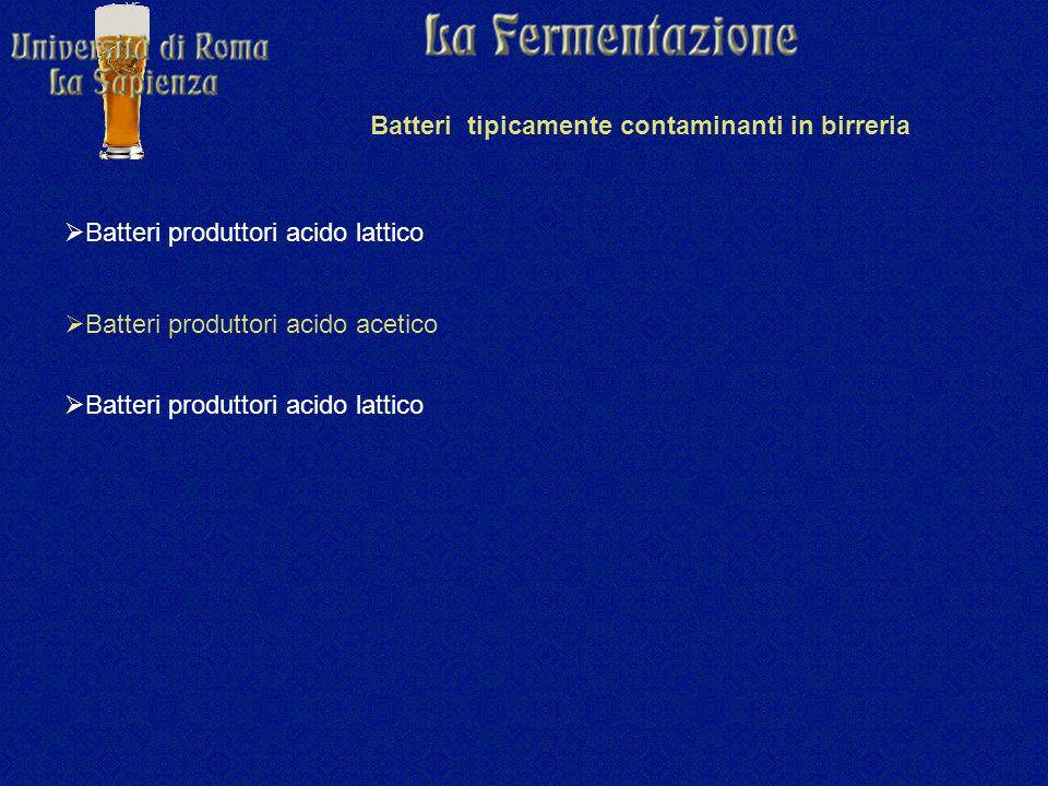 Batteri tipicamente contaminanti in birreria  Batteri produttori acido lattico  Batteri produttori acido acetico  Batteri produttori acido lattico
