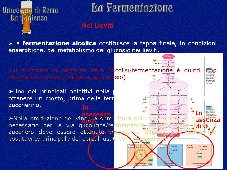  La fermentazione alcolica costituisce la tappa finale, in condizioni anaerobiche, del metabolismo del glucosio nei lieviti.