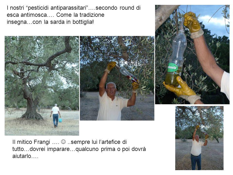I nostri pesticidi antiparassitari ….secondo round di esca antimosca….