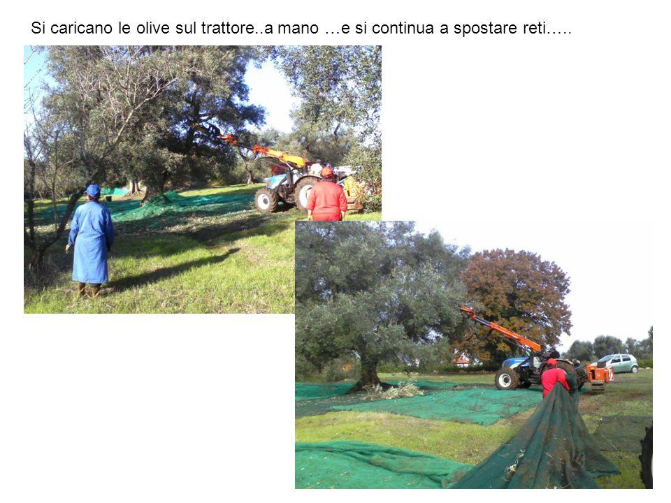 Si caricano le olive sul trattore..a mano …e si continua a spostare reti…..