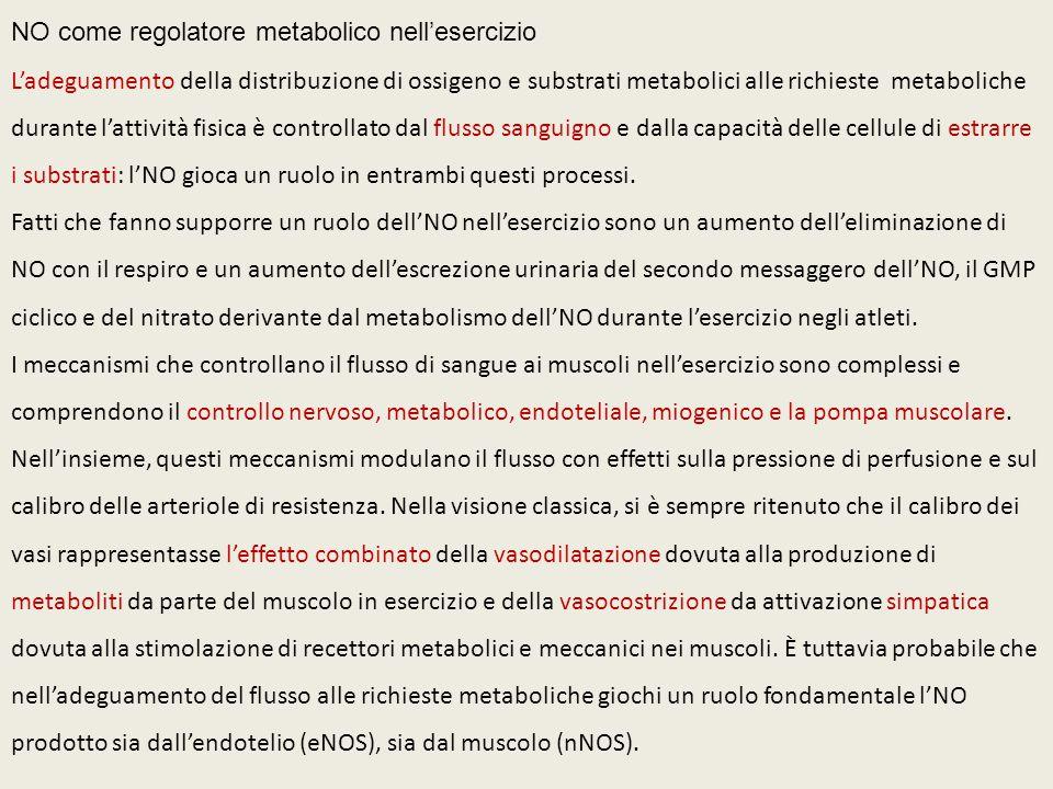 NO come regolatore metabolico nell'esercizio L'adeguamento della distribuzione di ossigeno e substrati metabolici alle richieste metaboliche durante l