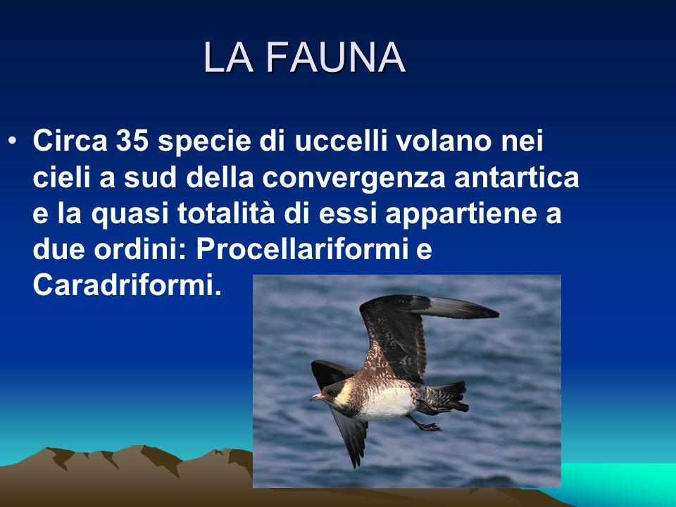 LA FAUNA Circa 35 specie di uccelli volano nei cieli a sud della convergenza antartica e la quasi totalità di essi appartiene a due ordini: Procellari