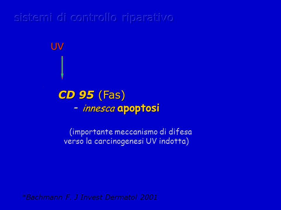 CD 95 (Fas) CD 95 (Fas) - innesca apoptosi - innesca apoptosi (importante meccanismo di difesa verso la carcinogenesi UV indotta) *Bachmann F.