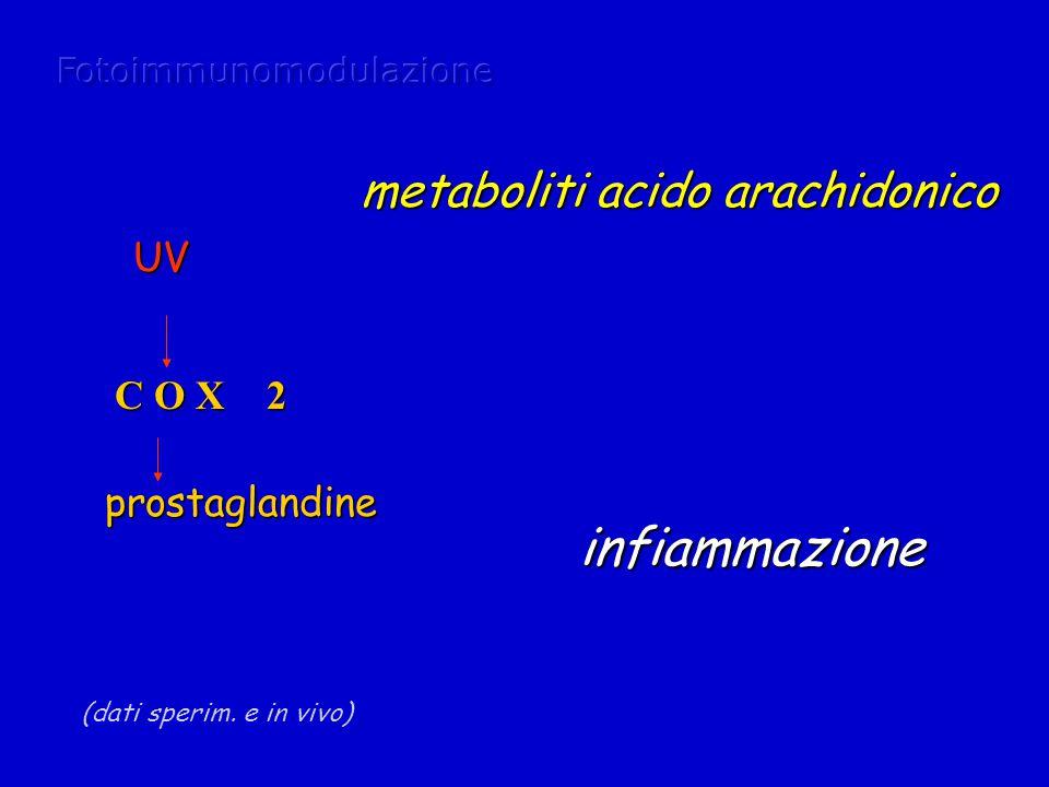 C O X 2 (dati sperim. e in vivo) UV prostaglandine metaboliti acido arachidonico infiammazione