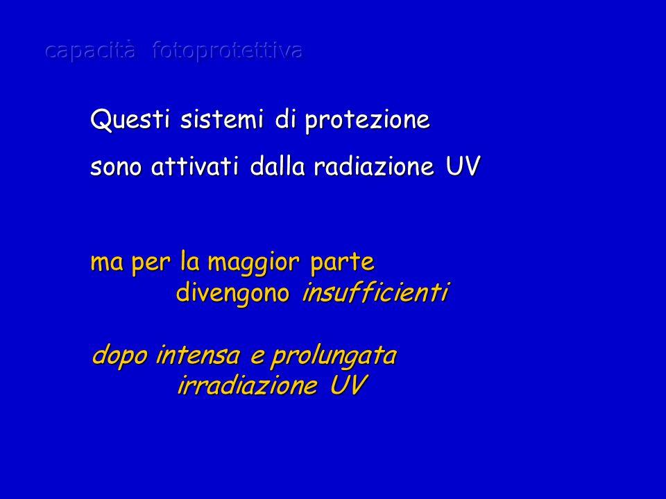 ma per la maggior parte divengono insufficienti divengono insufficienti dopo intensa e prolungata irradiazione UV irradiazione UV Questi sistemi di protezione sono attivati dalla radiazione UV