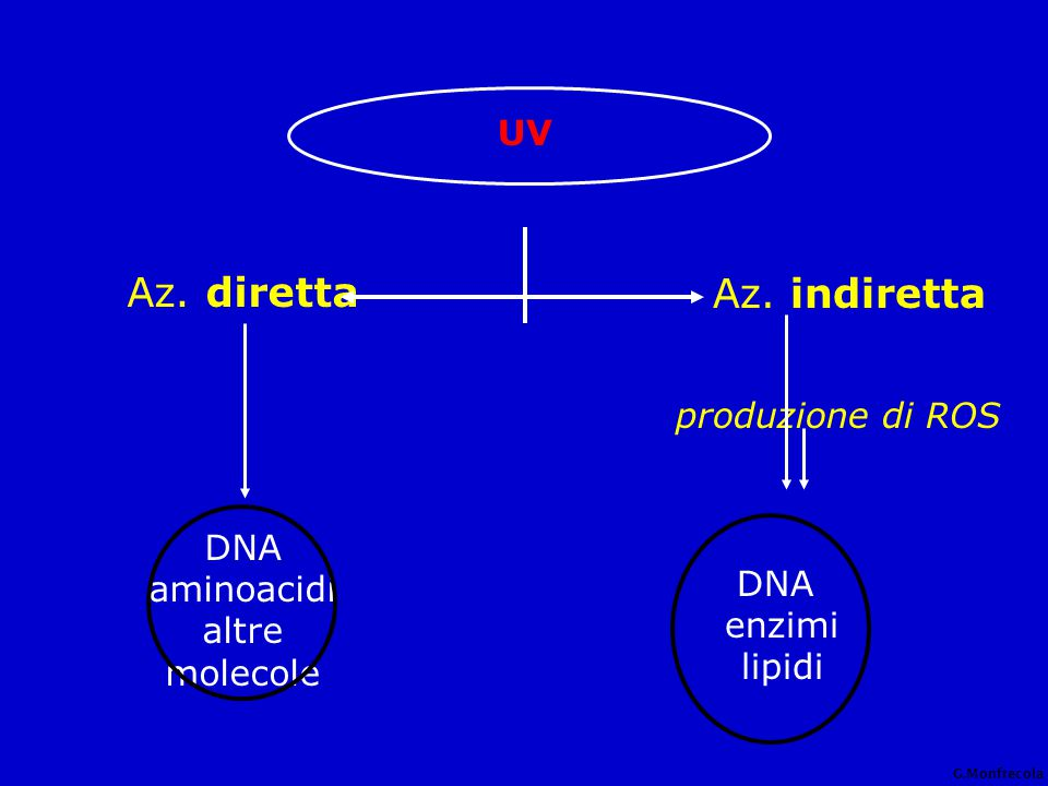 assorbita da basi del DNA NADH-NADPH, riboflavine citocromi triptofano e altri aminoacidi proteine enzimatiche acido urocanicoUCA * Sander CS et al.