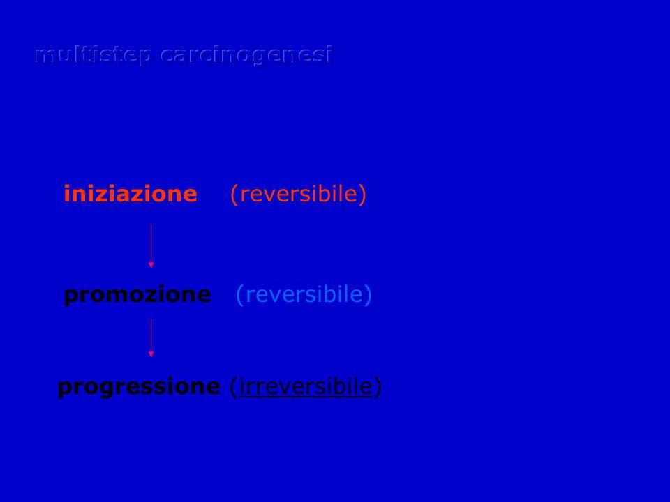 iniziazione (reversibile) promozione (reversibile) progressione (irreversibile)