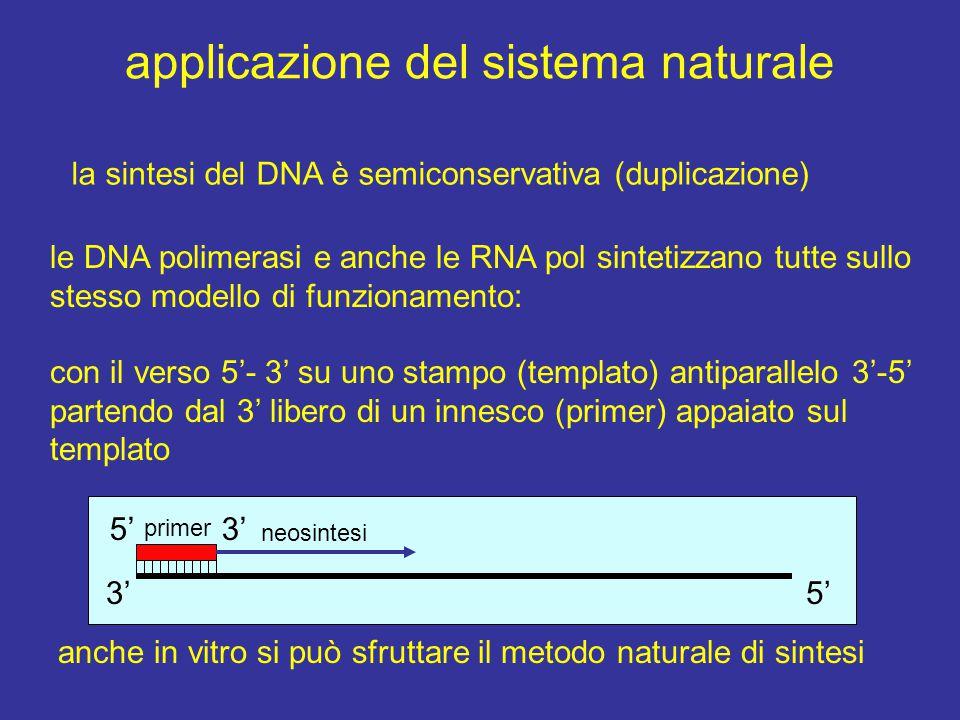 applicazione del sistema naturale la sintesi del DNA è semiconservativa (duplicazione) le DNA polimerasi e anche le RNA pol sintetizzano tutte sullo s