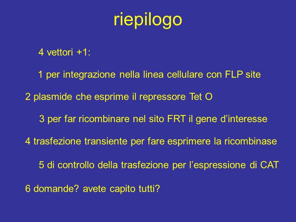 riepilogo 4 vettori +1: 1 per integrazione nella linea cellulare con FLP site 3 per far ricombinare nel sito FRT il gene d'interesse 4 trasfezione tra