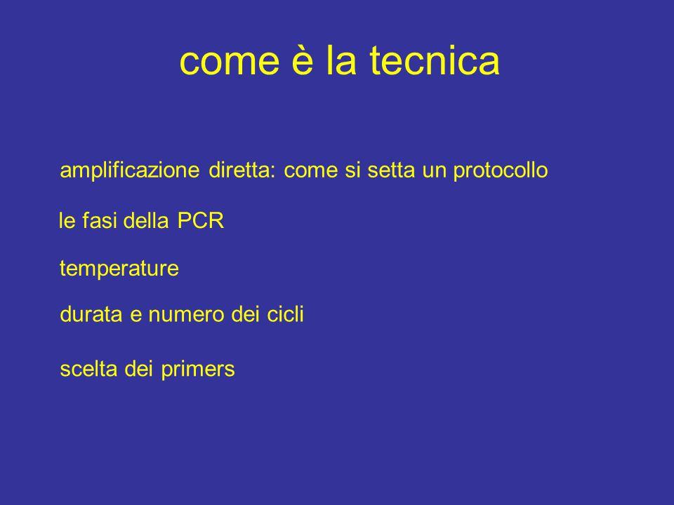 come è la tecnica amplificazione diretta: come si setta un protocollo le fasi della PCR temperature durata e numero dei cicli scelta dei primers