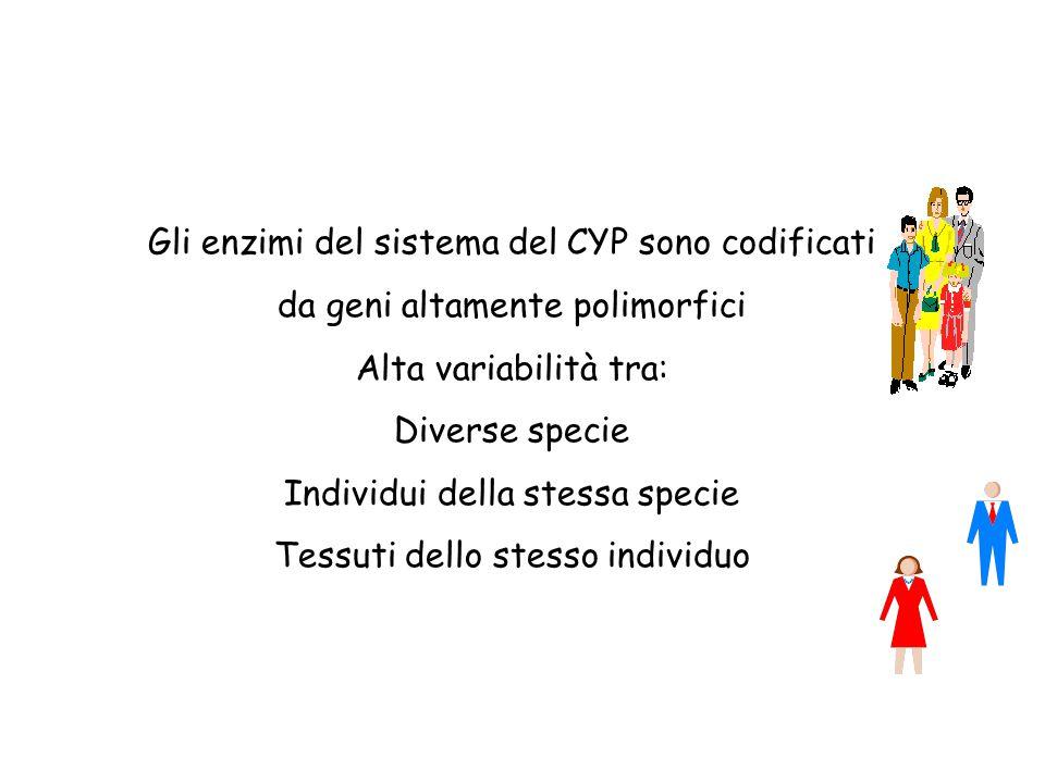 Gli enzimi del sistema del CYP sono codificati da geni altamente polimorfici Alta variabilità tra: Diverse specie Individui della stessa specie Tessut