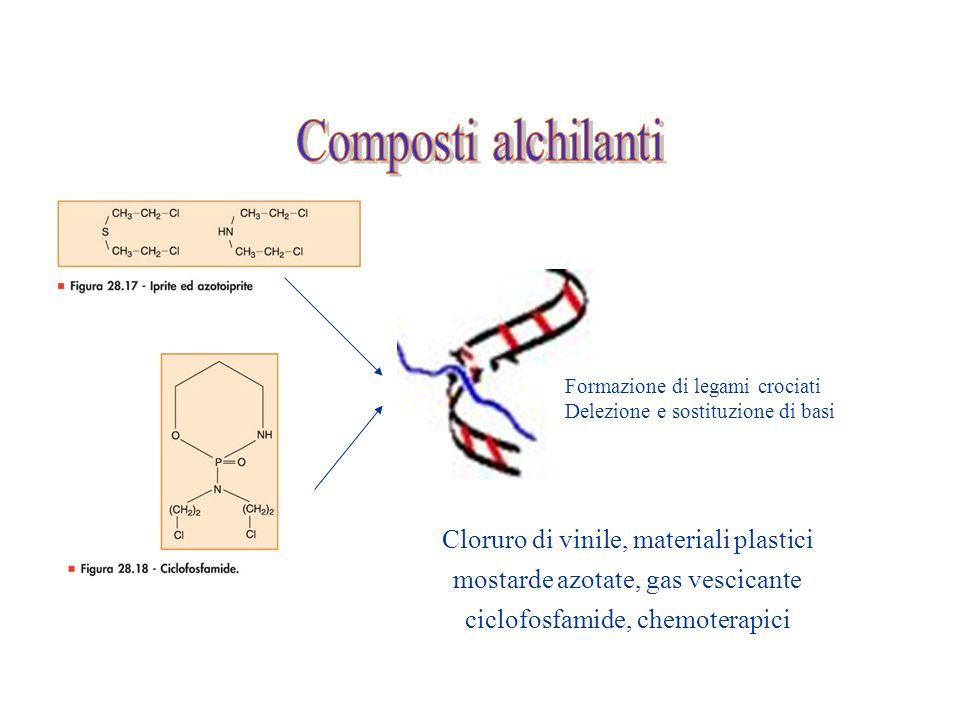 Formazione di legami crociati Delezione e sostituzione di basi Cloruro di vinile, materiali plastici mostarde azotate, gas vescicante ciclofosfamide,
