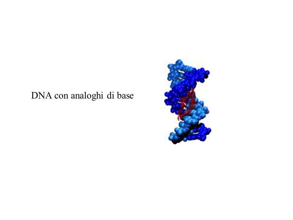 DNA con analoghi di base