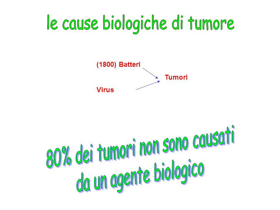 (1800) Batteri Tumori Virus