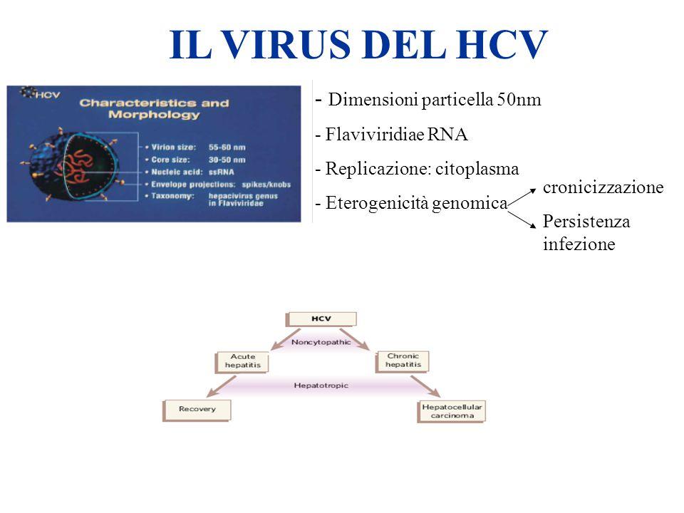 HCV IL VIRUS DEL HCV - Dimensioni particella 50nm - Flaviviridiae RNA - Replicazione: citoplasma - Eterogenicità genomica cronicizzazione Persistenza