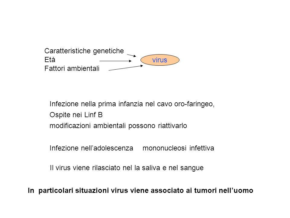 Caratteristiche genetiche Età Fattori ambientali virus Infezione nella prima infanzia nel cavo oro-faringeo, Ospite nei Linf B modificazioni ambiental