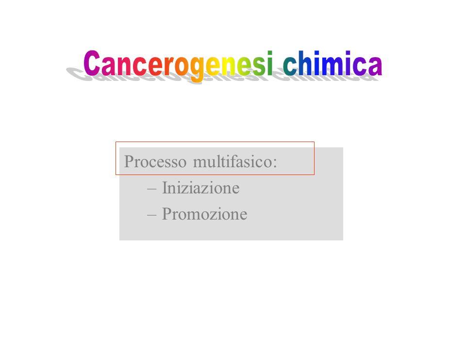 Processo multifasico: –Iniziazione –Promozione