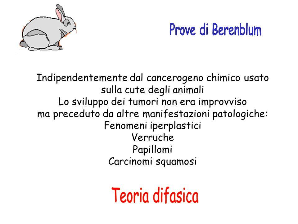 Indipendentemente dal cancerogeno chimico usato sulla cute degli animali Lo sviluppo dei tumori non era improvviso ma preceduto da altre manifestazion