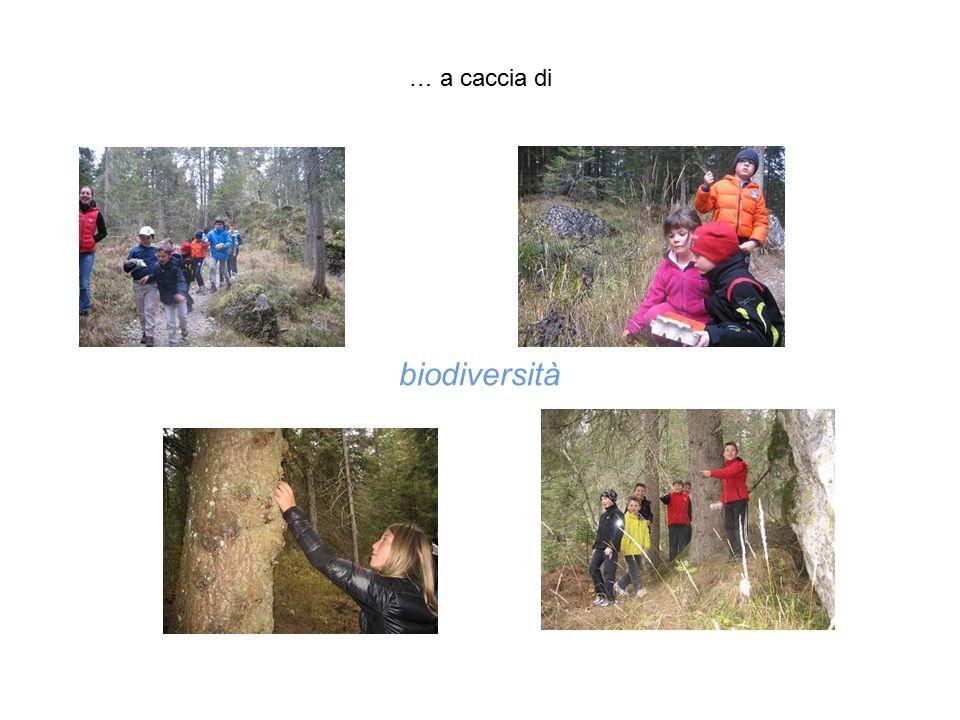 … a caccia di biodiversità