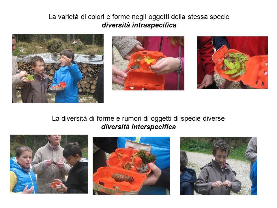 La varietà di colori e forme negli oggetti della stessa specie diversità intraspecifica La diversità di forme e rumori di oggetti di specie diverse di