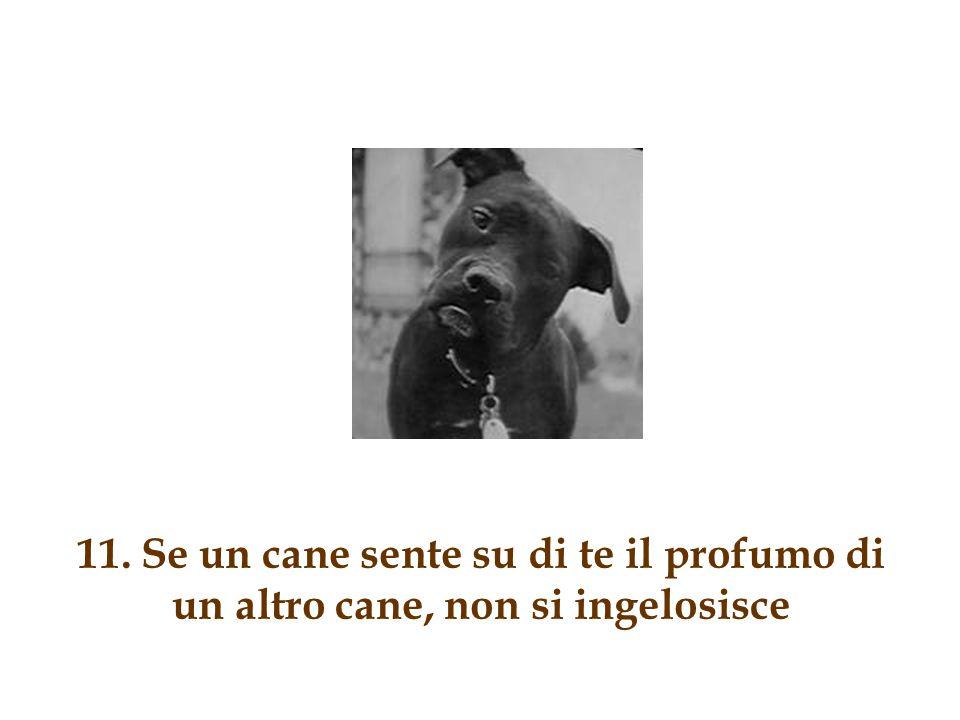 10. Se un cane ha dei cuccioli, puoi mettere un annuncio sul giornale e darli via