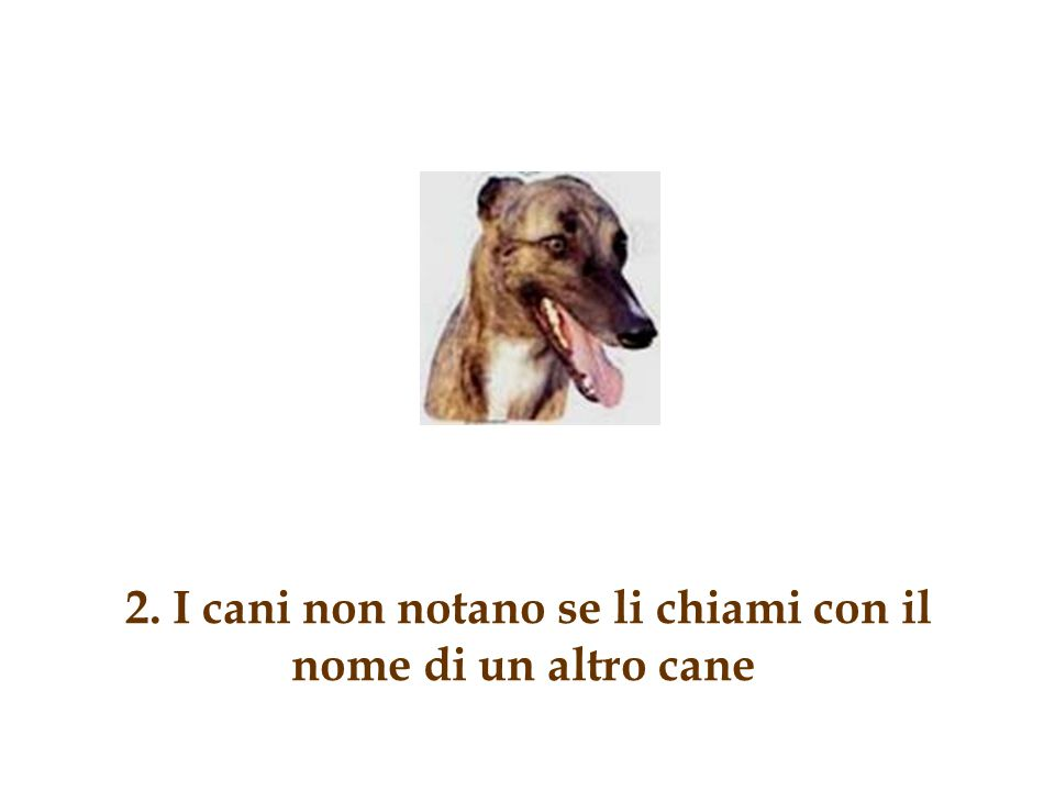 2. I cani non notano se li chiami con il nome di un altro cane