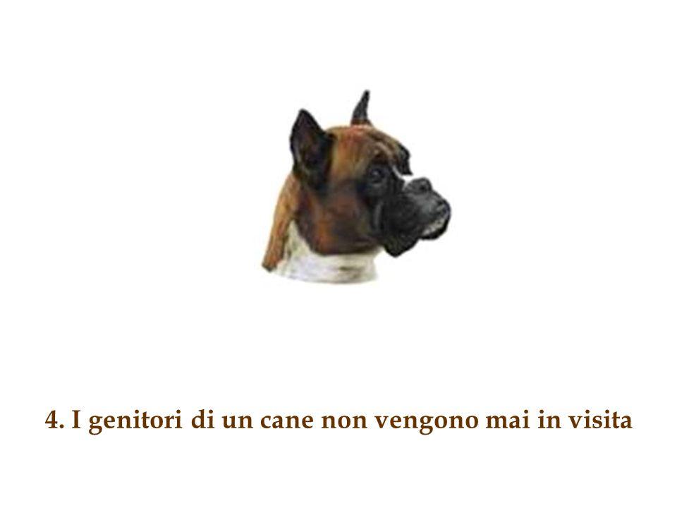 3. I cani apprezzano se lasci molte cose sul pavimento