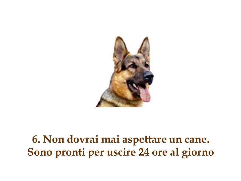 5. Ai cani piace se alzi la voce per avere ragione