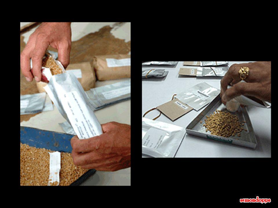Attualmente esistono già nel mondo, più di 1.000 banche di semi. Tuttavia, moltissime di queste, soprattutto nei paesi in via di sviluppo, si trovano
