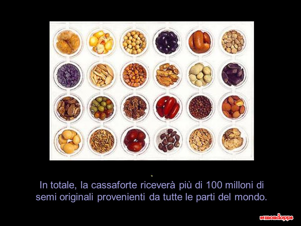 . In totale, la cassaforte riceverà più di 100 milloni di semi originali provenienti da tutte le parti del mondo.