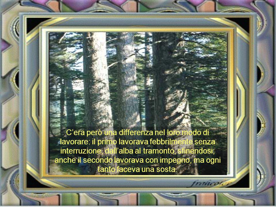 Due boscaioli lavoravano nella stessa foresta ad abbattere alberi.