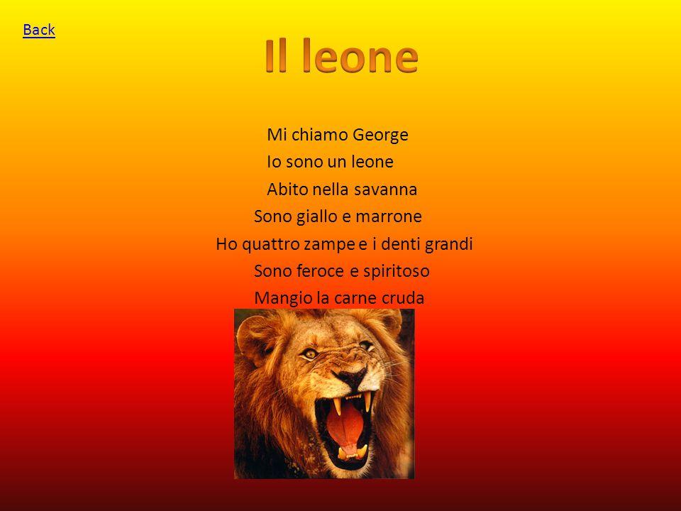Mi chiamo George Io sono un leone Abito nella savanna Sono giallo e marrone Ho quattro zampe e i denti grandi Sono feroce e spiritoso Mangio la carne cruda Back