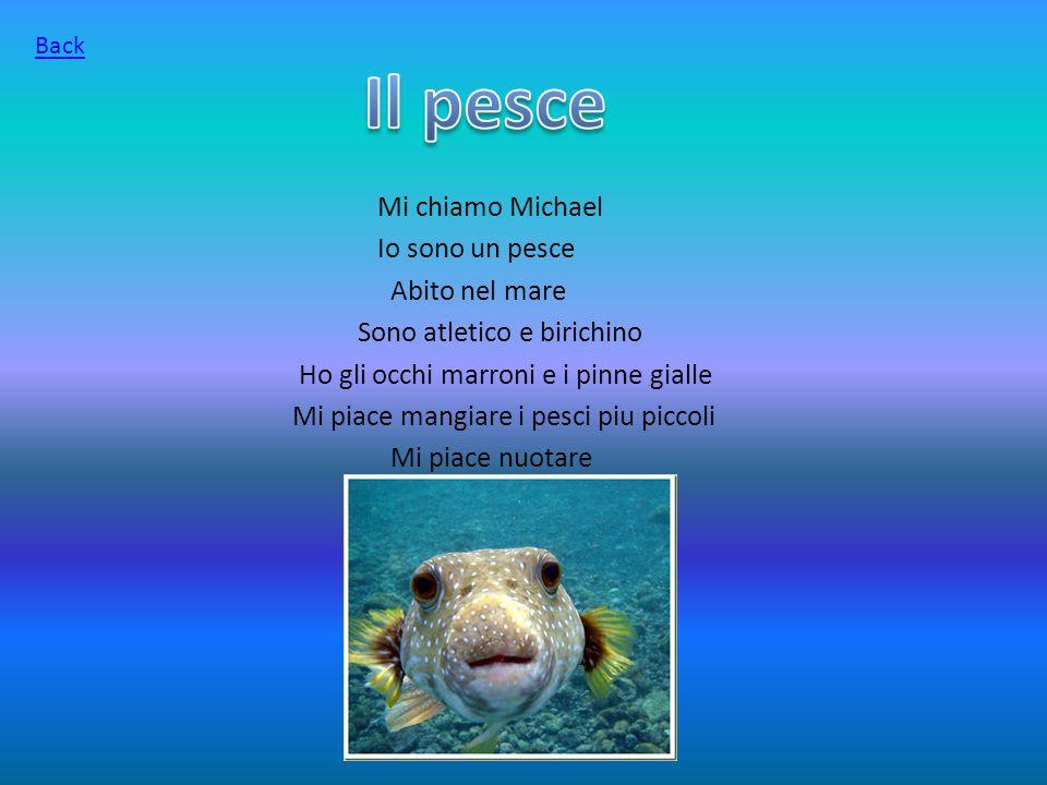 Mi chiamo Michael Io sono un pesce Abito nel mare Sono atletico e birichino Ho gli occhi marroni e i pinne gialle Mi piace mangiare i pesci piu piccoli Mi piace nuotare Back