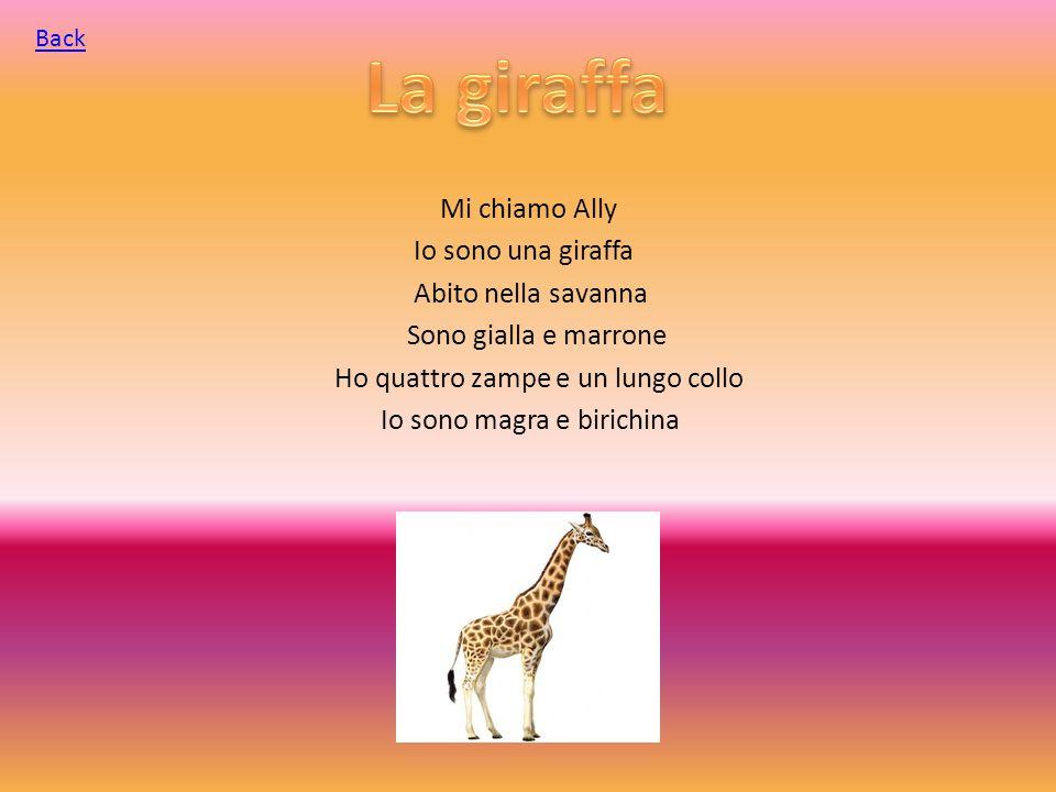 Mi chiamo Ally Io sono una giraffa Abito nella savanna Sono gialla e marrone Ho quattro zampe e un lungo collo Io sono magra e birichina Back