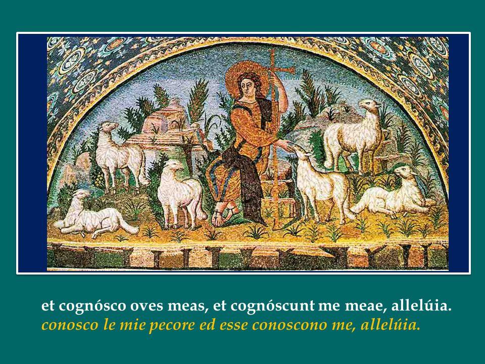 Ego sum pastor bonus, allelúia: Io sono il buon pastore, allelúia:
