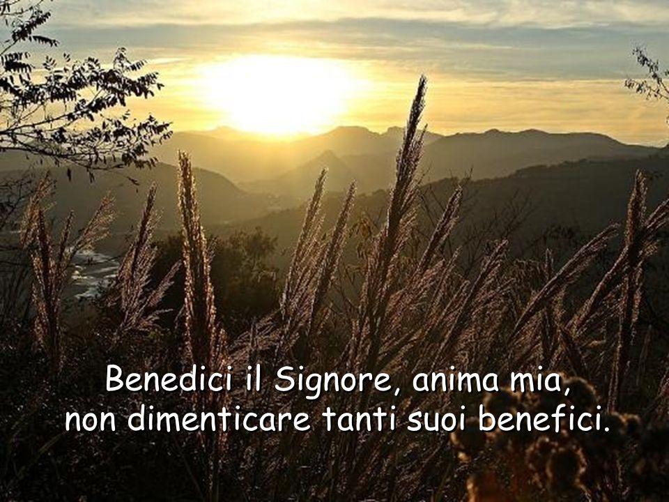 Benedici il Signore, anima mia,quanto è in me benedica il suo santo nome. Benedici il Signore, anima mia,quanto è in me benedica il suo santo nome.
