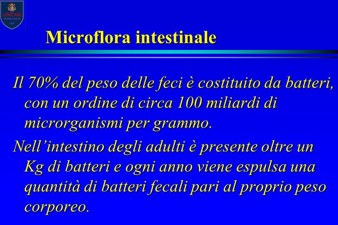 Microflora intestinale Il 70% del peso delle feci è costituito da batteri, con un ordine di circa 100 miliardi di microrganismi per grammo. Nell'intes