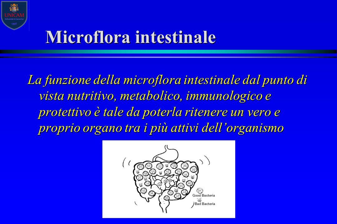 Microflora intestinale La funzione della microflora intestinale dal punto di vista nutritivo, metabolico, immunologico e protettivo è tale da poterla